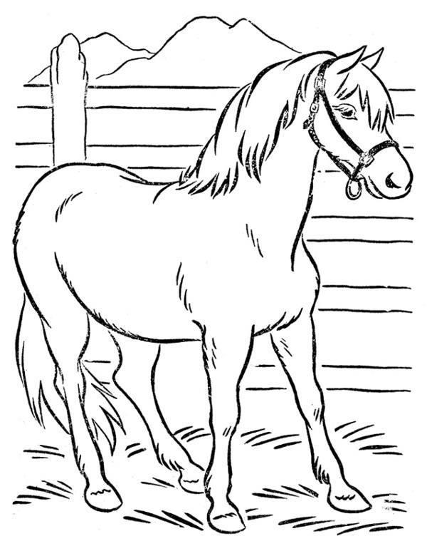 koń.png