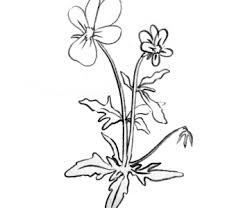 kwiat.png