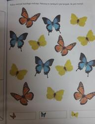 Galeria 16.06.2020 Motylki